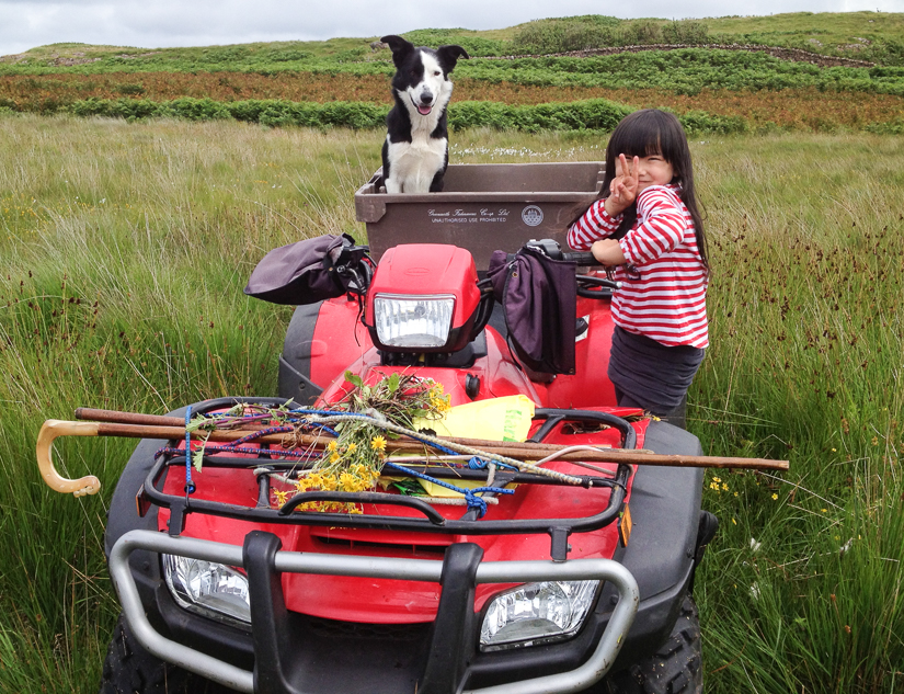 Collecting ragwort on Penmore farm